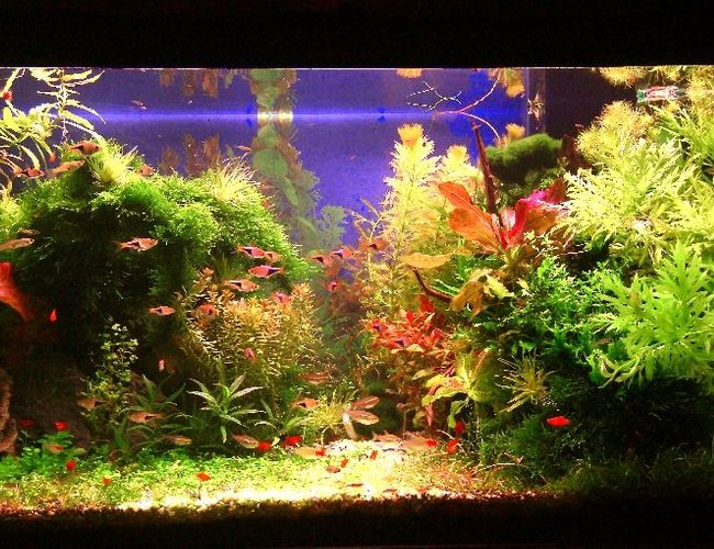 50 gallons planted tank (mostly live plants and fish) - Wet, Sweat and Blood
