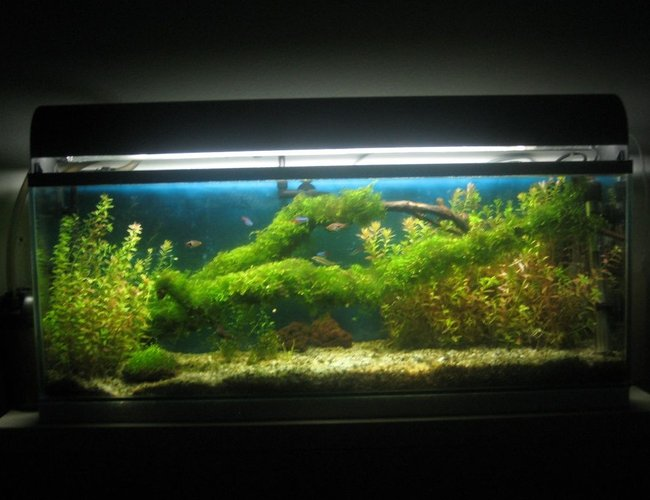12 gallons planted tank (mostly live plants and fish) - Planted fish tank.