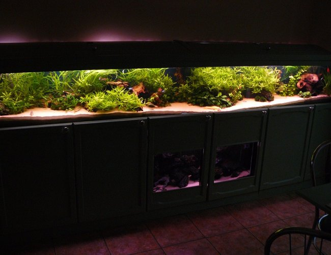 90 gallons planted tank (mostly live plants and fish) - Front veiw of 10 foot tank.