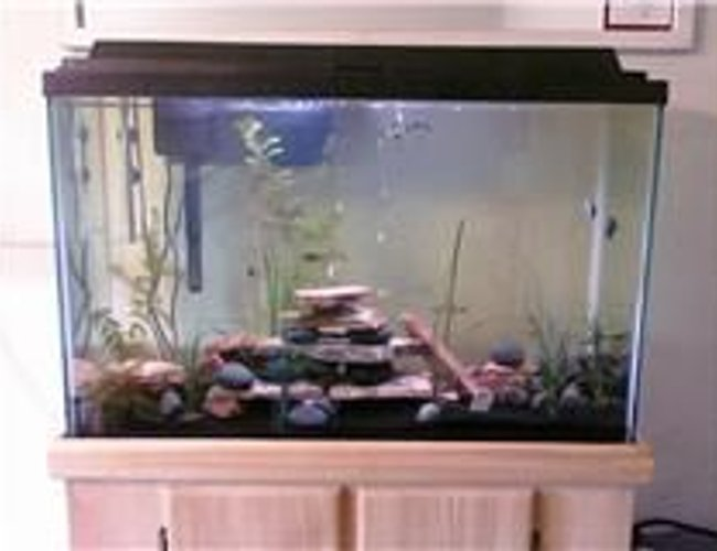 45 gallons planted tank (mostly live plants and fish) - All live plants and fish