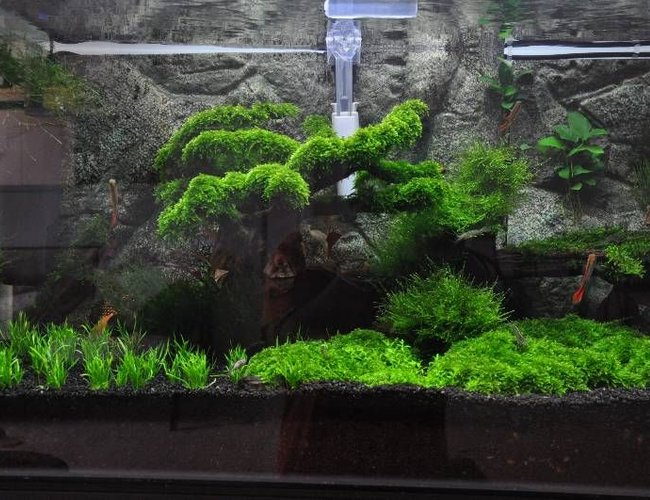45 gallons planted tank (mostly live plants and fish) - my first attempt to make a planted tank..
