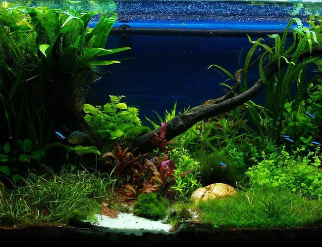 50 gallons planted tank (mostly live plants and fish) - front view