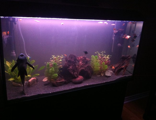 77 gallons planted tank (mostly live plants and fish) - 77 gallon newly planted community tank.