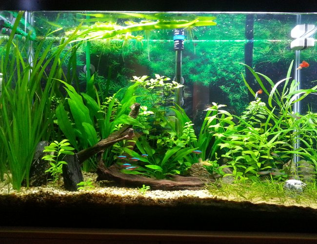 45 gallons planted tank (mostly live plants and fish) - picture taken after trimming