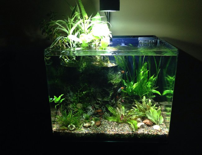 38 gallons planted tank (mostly live plants and fish) - Home  tank.