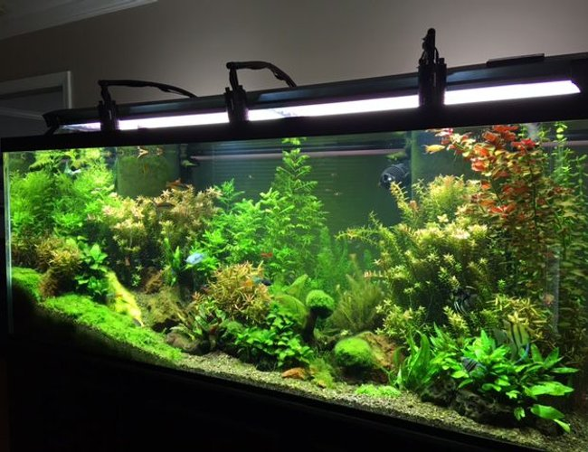 225 gallons planted tank (mostly live plants and fish) - 225 standard 6 FT Freshwater Planted Aquarium.