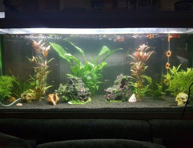 44 gallons planted tank (mostly live plants and fish) - Full view of our fresh water planted fish tank