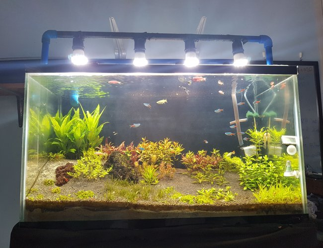 35 gallons planted tank (mostly live plants and fish) - Dutch Style hybrid