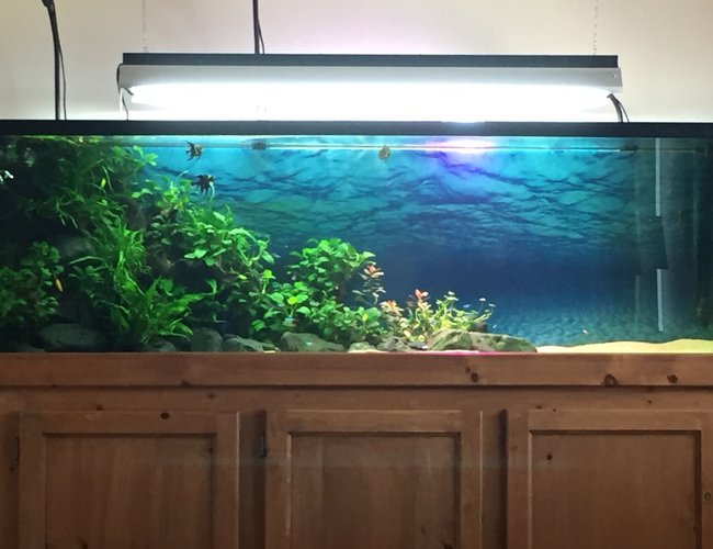 125 gallons planted tank (mostly live plants and fish) - Planted Tank