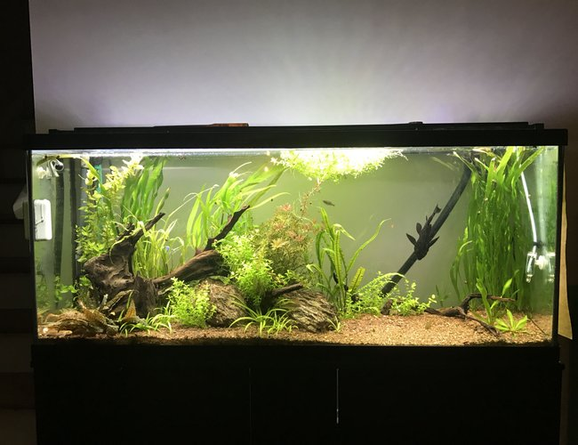 60 gallons planted tank (mostly live plants and fish) - 60 Gal, planted tank