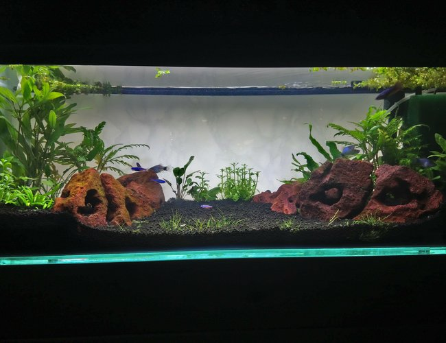 15 gallons planted tank (mostly live plants and fish) - First planted tank set up