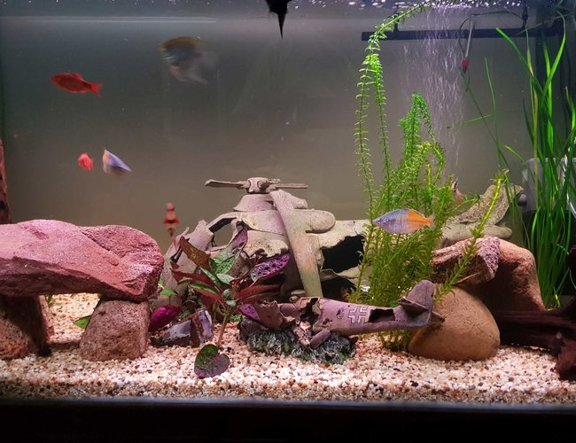 120 gallons planted tank (mostly live plants and fish) - Revised