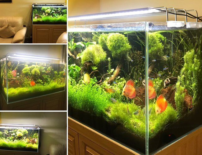 50 gallons planted tank (mostly live plants and fish) - Freshwater Planted Tank 50G #nextfisherman