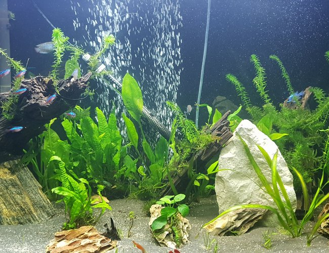 90 gallons planted tank (mostly live plants and fish) - 1st pic