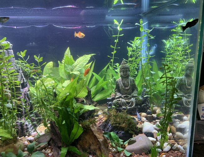 40 gallons planted tank (mostly live plants and fish) - Did some weekly maintenance. Plants are growing nicely.