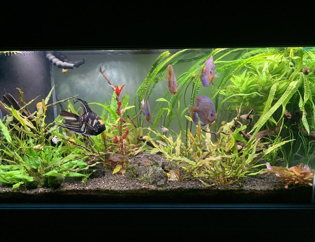 90 gallons planted tank (mostly live plants and fish) - Fresh trim and clean out.