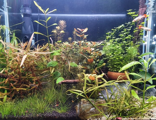 20 gallons planted tank (mostly live plants and fish) - Mixed planted