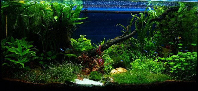 Rated #1: 50 Gallons Planted Tank - front view