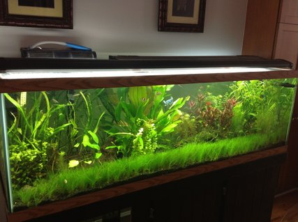 Rated #9: 125 Gallons Planted Tank - 125g Planted