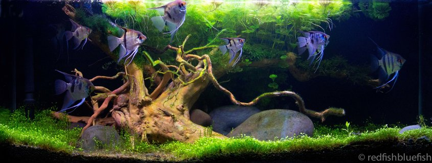 Rated #5: 90 Gallons Planted Tank - planted 200ltr
