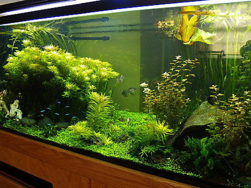 Rated #2: 300 Gallons Planted Tank - 300 gallon South American