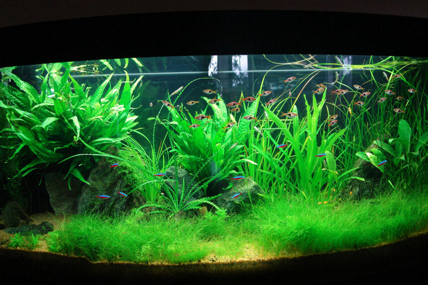 Rated #8: 64 Gallons Planted Tank - planted tank