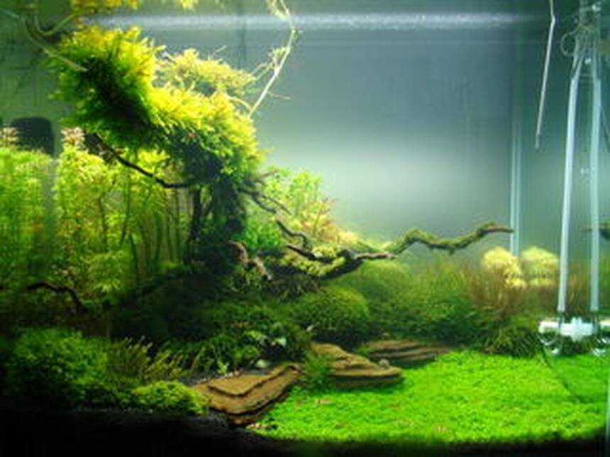 Rated #6: 32 Gallons Planted Tank - a