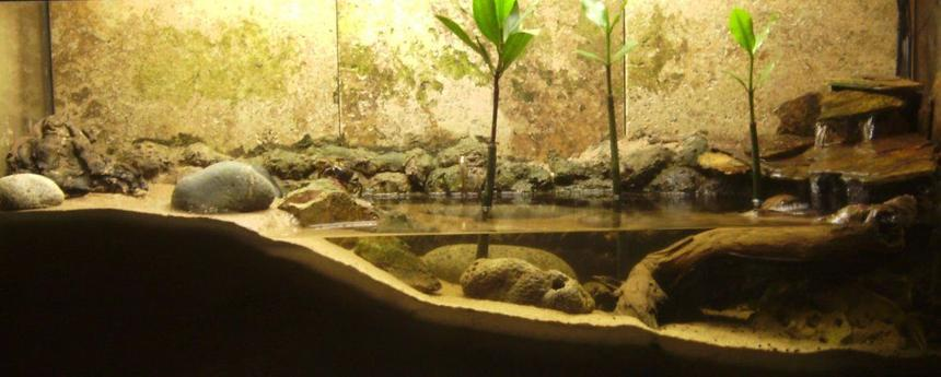 Rated #99: 30 Gallons Planted Tank - Mudskipper/Fiddler Crab tank.  (Brackish)