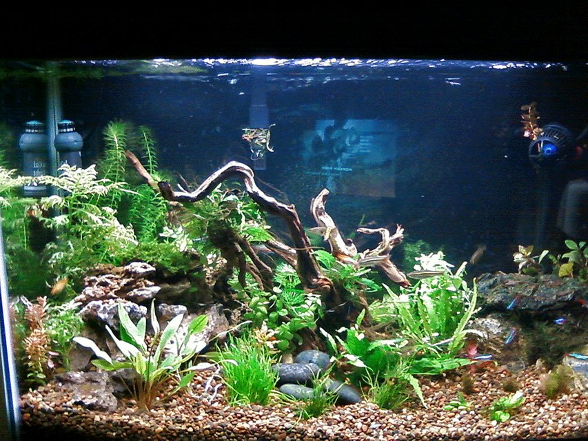 Rated #51: 29 Gallons Planted Tank - 29 gallon