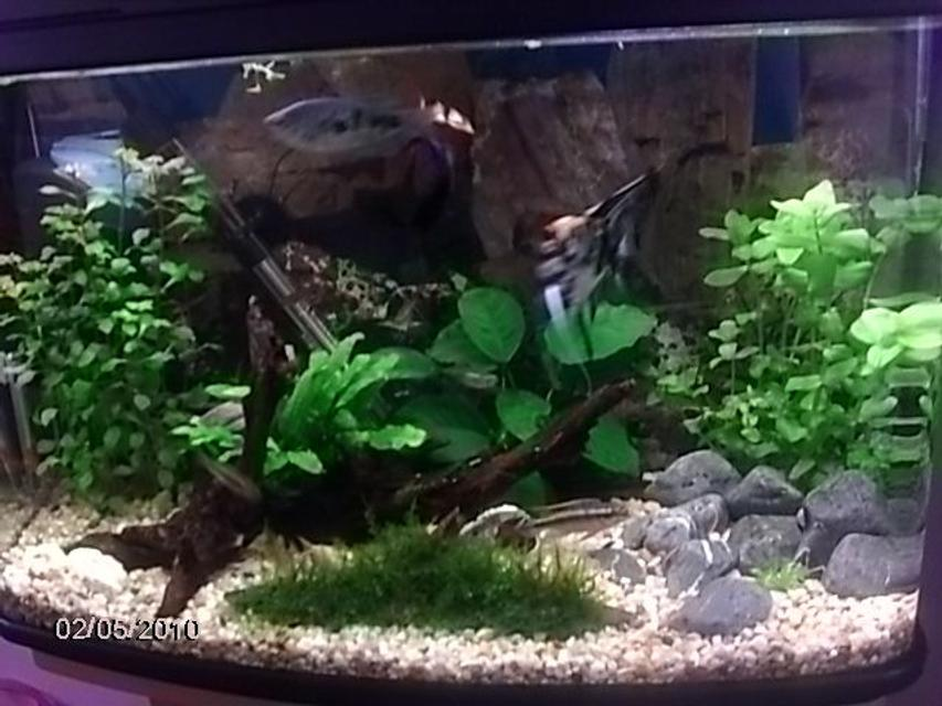 Rated #100: 17 Gallons Planted Tank - .