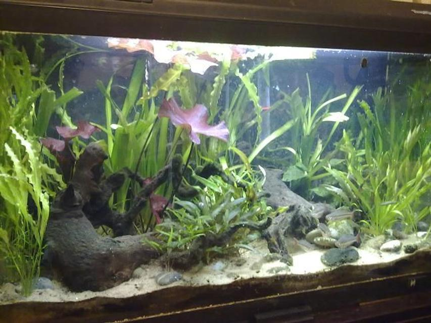 Rated #68: 28 Gallons Planted Tank - Slight Clouding Due To Water Change