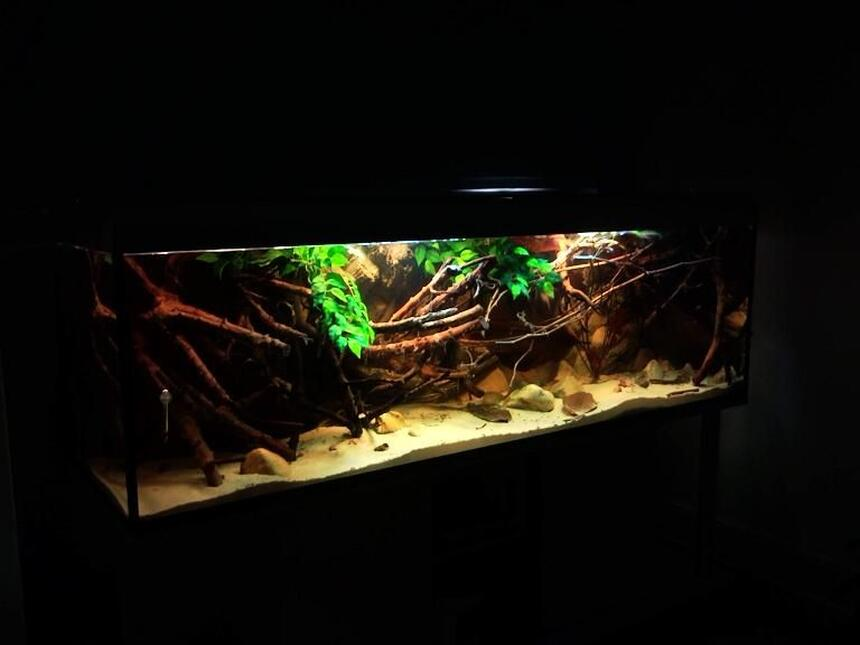 Rated #63: 182 Gallons Planted Tank - Amazon Biotope