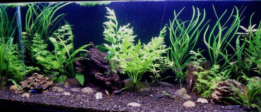 Rated #70: 65 Gallons Planted Tank - 48x18x18 Planted tank