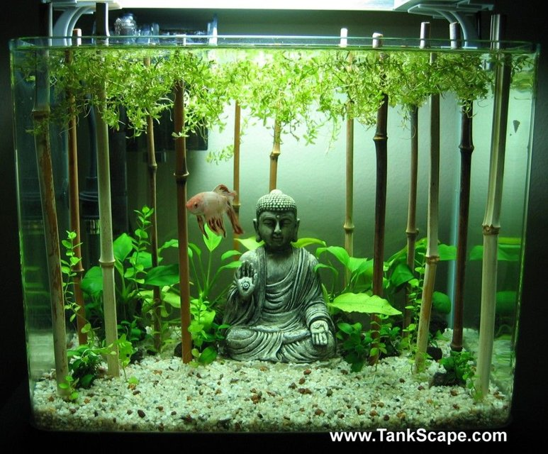 Rated #61: 4 Gallons Planted Tank - My Buddha Betta Tank