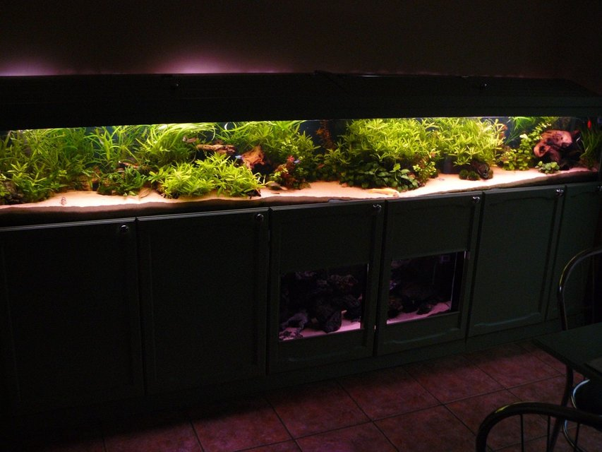 Rated #1: 90 Gallons Planted Tank - Front veiw of 10 foot tank.