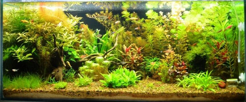 Rated #3: 44 Gallons Planted Tank - Planted Tank