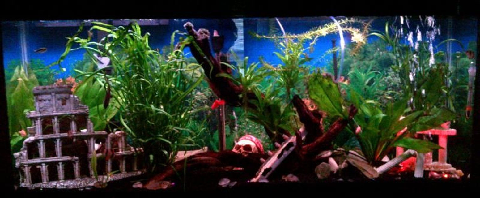 Rated #59: 45 Gallons Planted Tank - 45 gallon freshwater tank... My first big tank :-)
