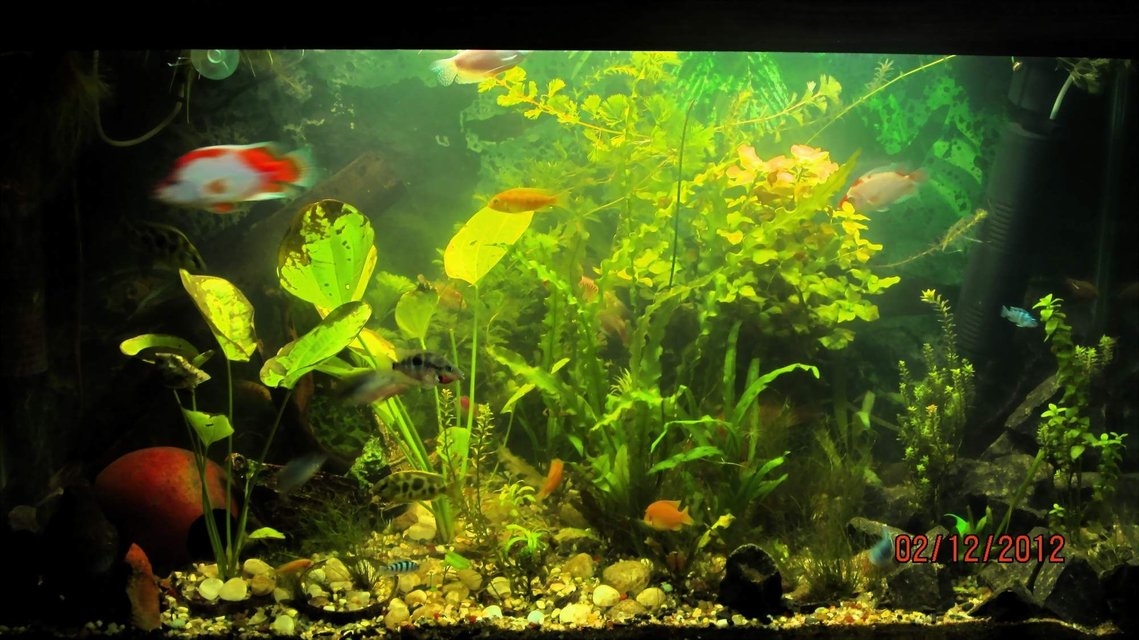 Rated #76: 90 Gallons Planted Tank - updated with new plants