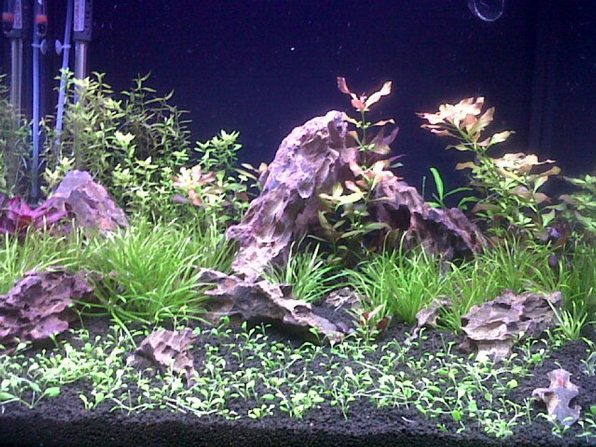 Rated #80: 45 Gallons Planted Tank