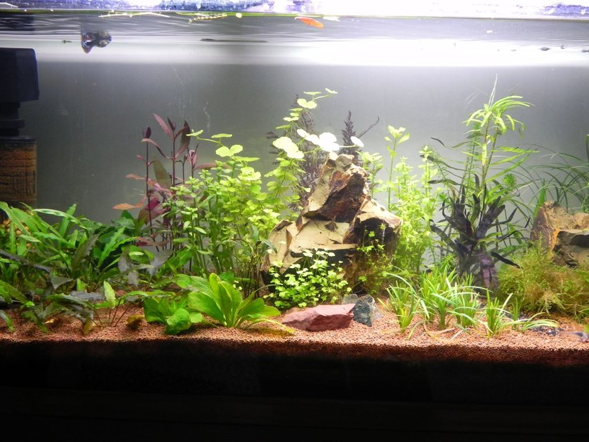 Rated #79: 30 Gallons Planted Tank