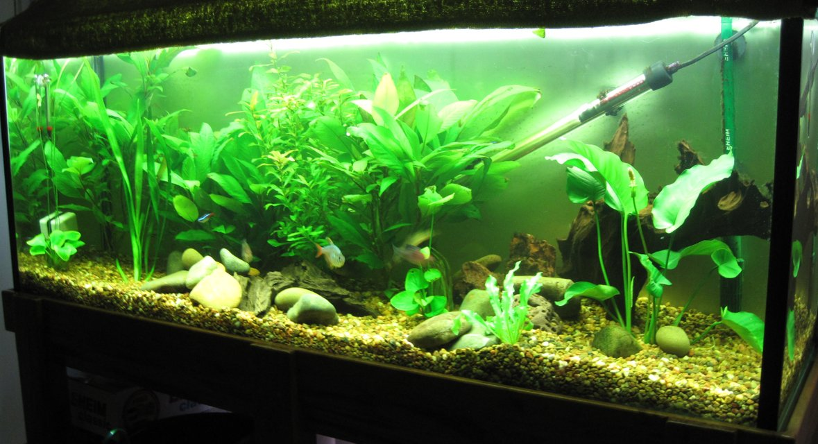 Rated #75: 52 Gallons Planted Tank - das tank