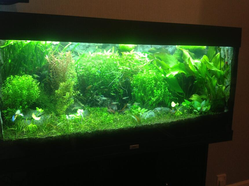 Rated #7: 40 Gallons Planted Tank - Planted aquarium with lots of rasbora
