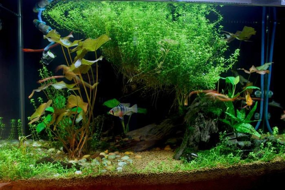 Rated #23: 20 Gallons Planted Tank - Planted!