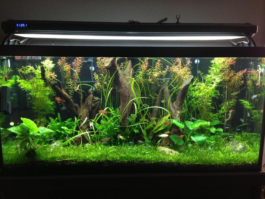 Rated #10: 90 Gallons Planted Tank - This is a cleaner version of my previous pic!