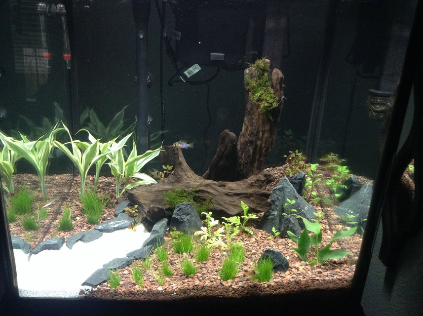 Rated #53: 120 Gallons Planted Tank - 27 gallon cube