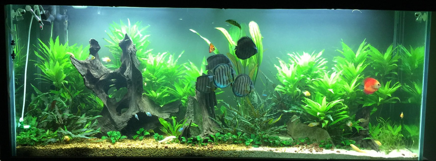 Rated #4: 150 Gallons Planted Tank - 150 gal