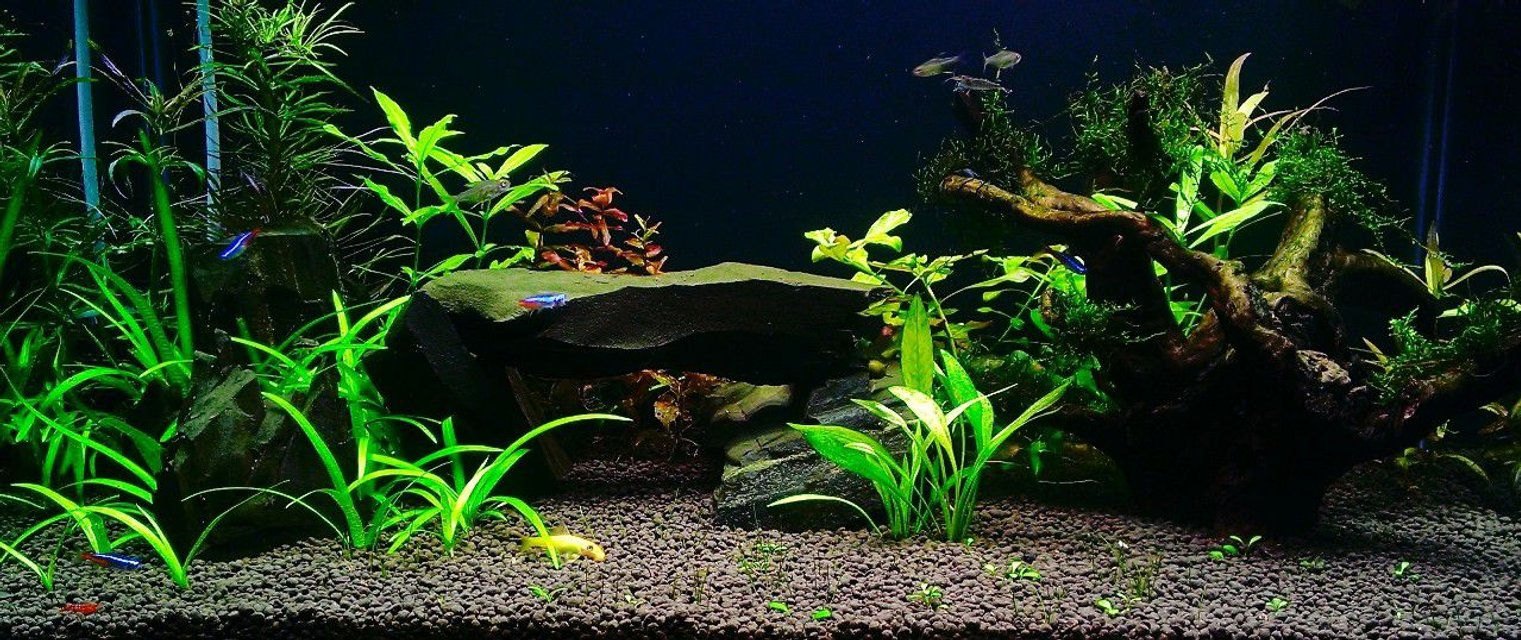Rated #7: 100 Gallons Planted Tank - plant tank with rock and wood
