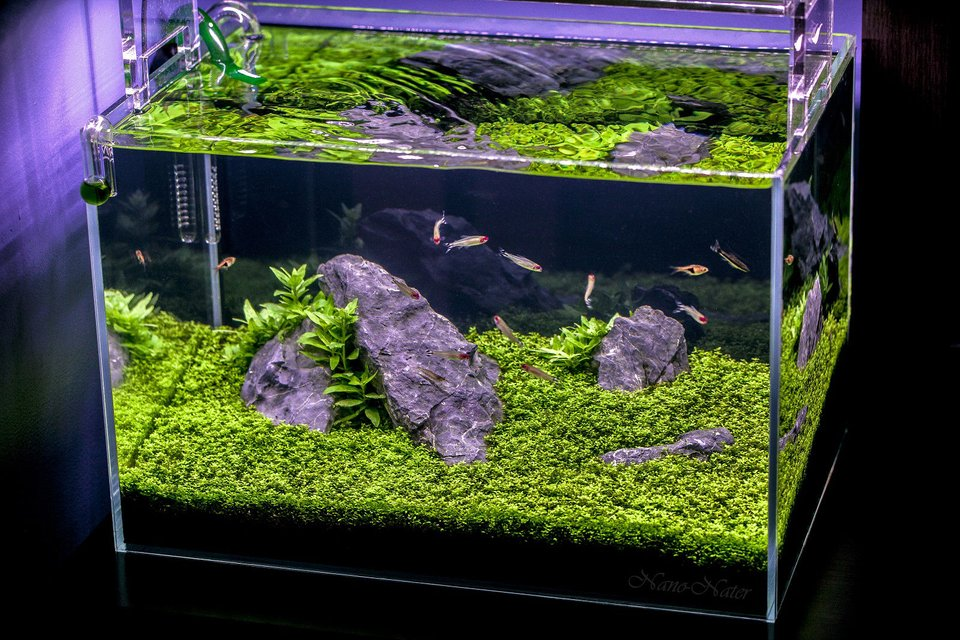 Rated #8: 10 Gallons Planted Tank - 10 Gallons Started April 1rst 2015,Date of Shot: June 13th 2015. This shot shows the Aquarium as if you were viewing it in person. I used a B+W Polarized Filter to acheive this.