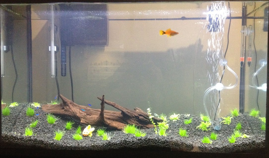 Rated #68: 30 Gallons Planted Tank - 30g freshly planted.