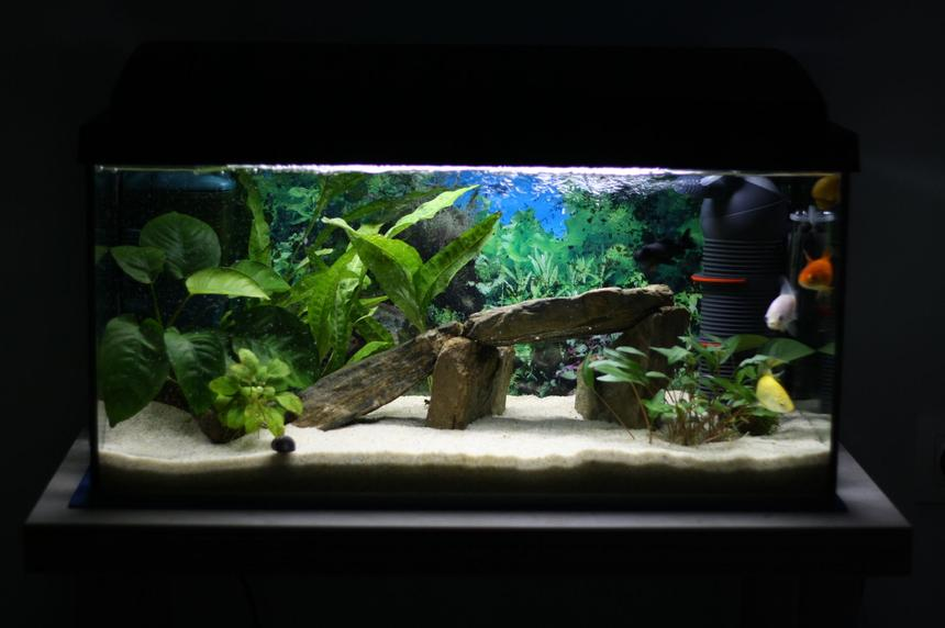 Rated #30: 15 Gallons Planted Tank - My tank
